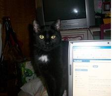 Kitten : Male