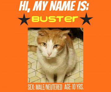 Buster : Male