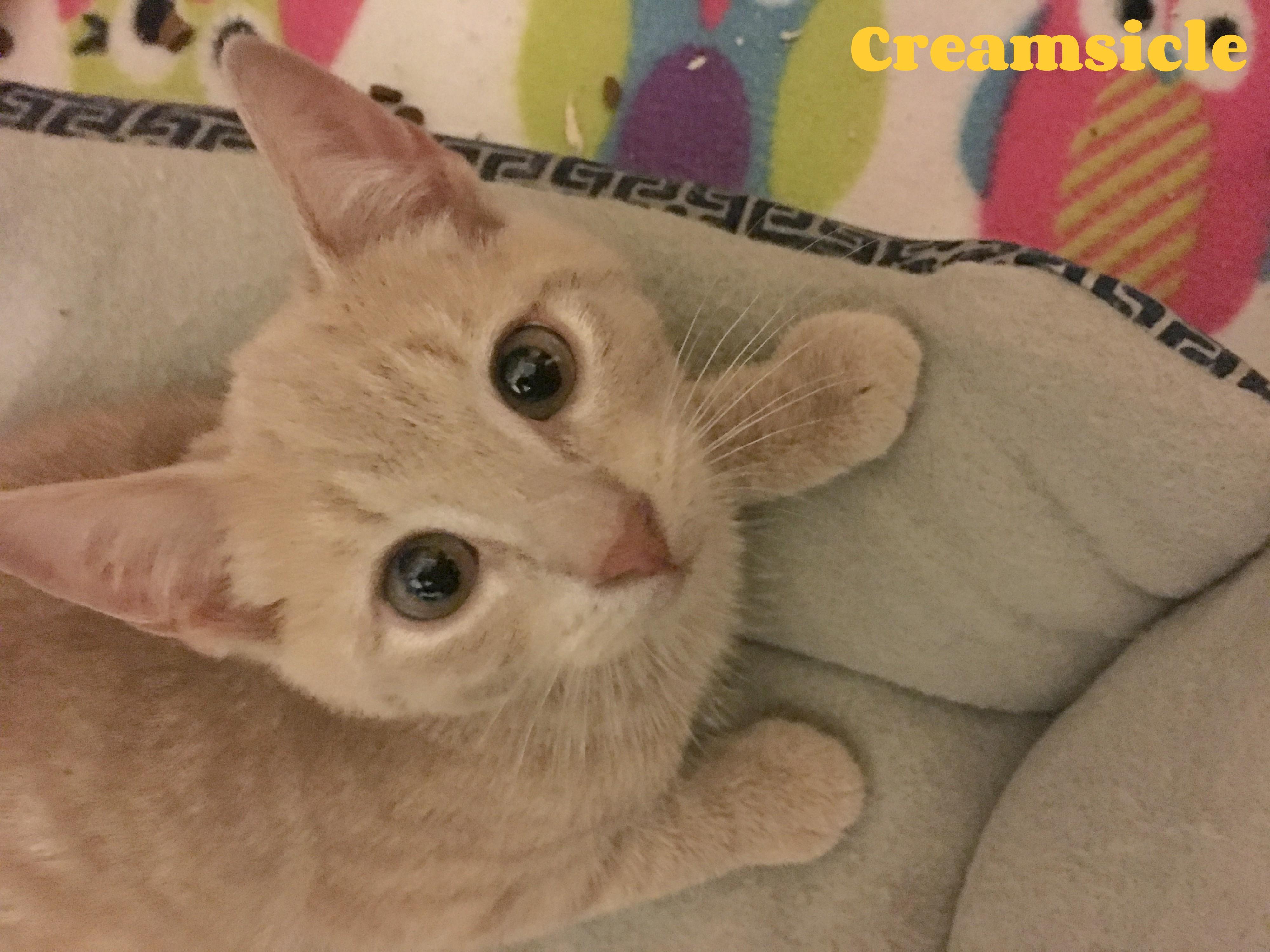 Creamsicle :