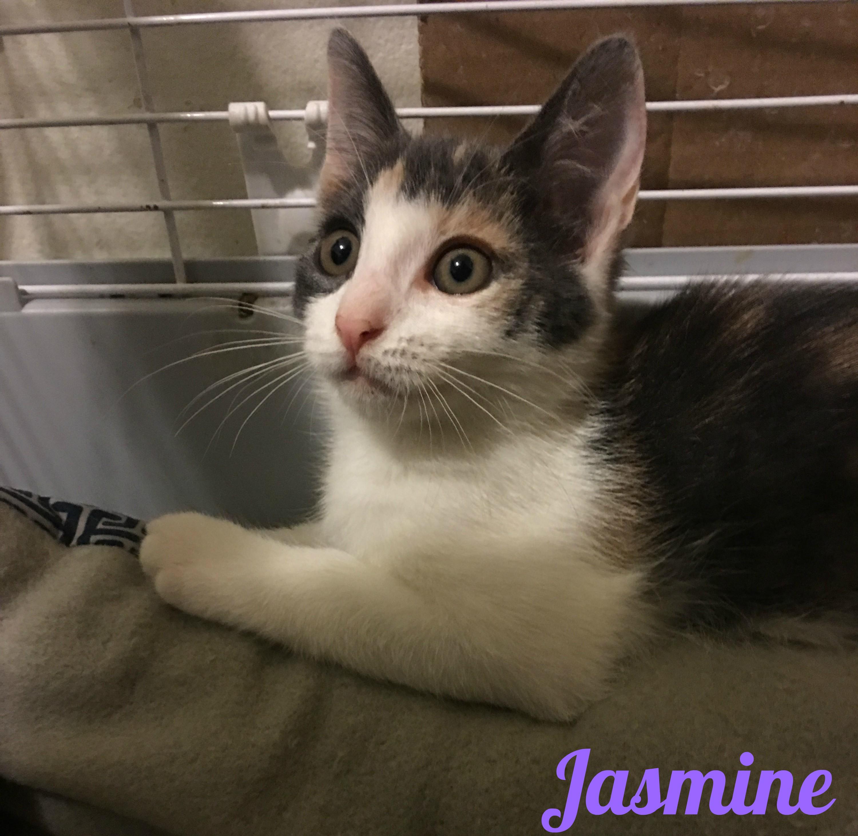 Jasmine :