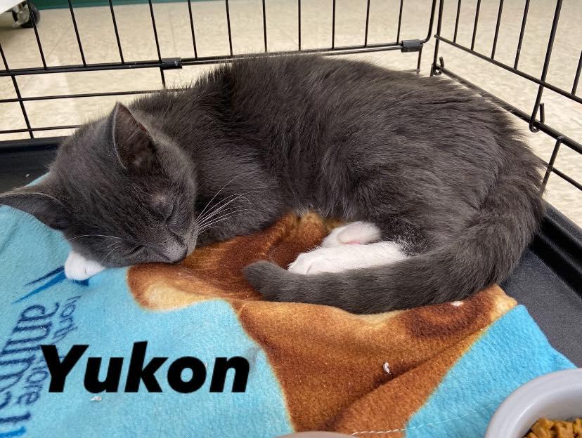 yukon :